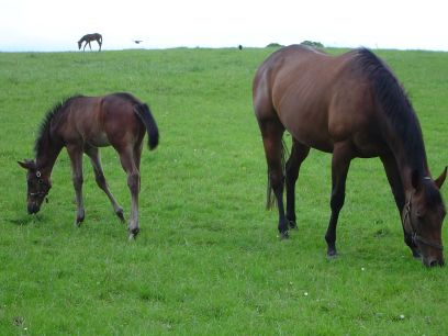 National Studs de Kildare